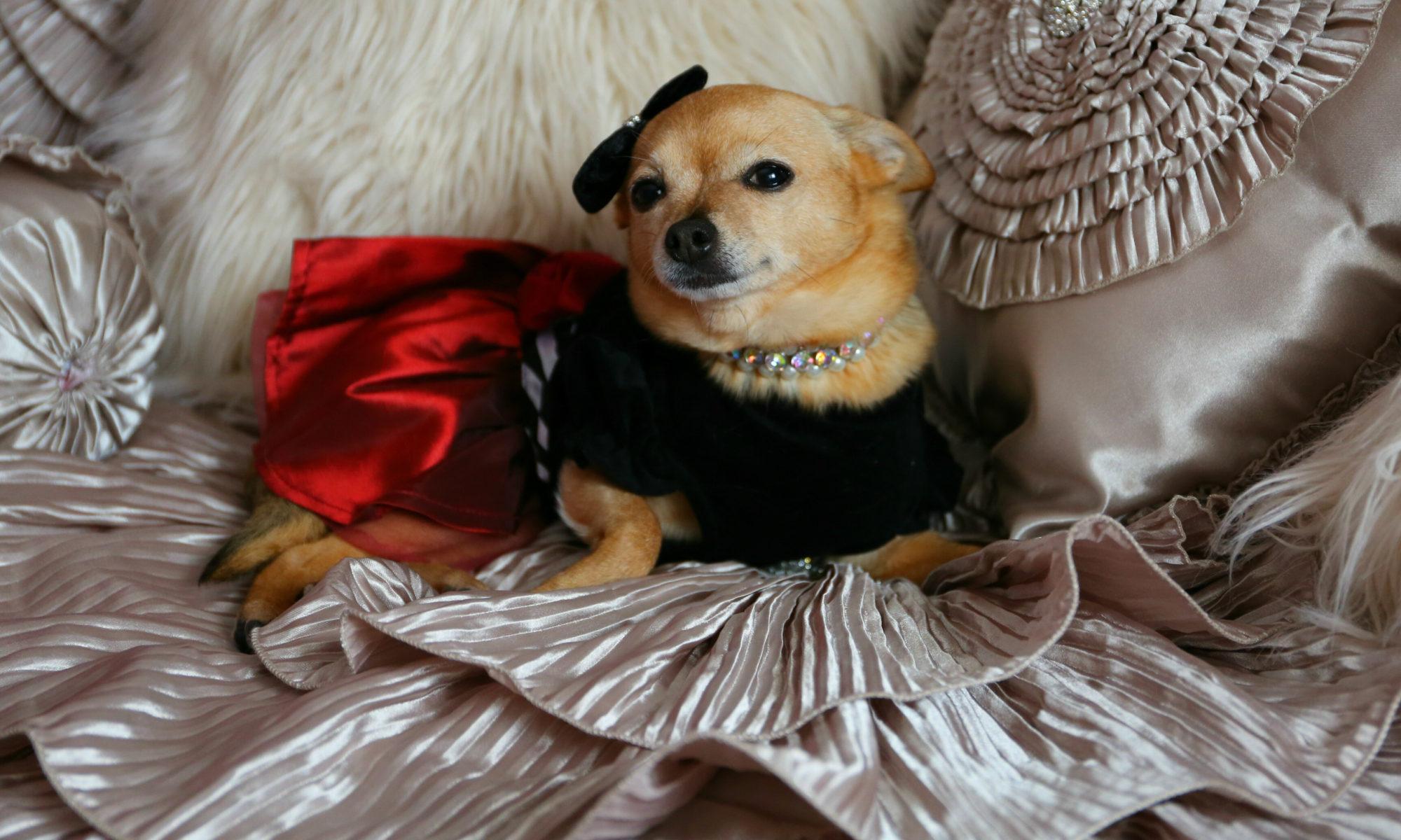 Shannon Heggem-Luxury Pet Expert